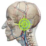 顎関節ターゲット01