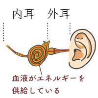 内耳・外耳イメージ02