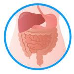 肩こりの根本原因はお腹の不調にあります。内臓の冷えにも関連します。鍼灸は効果的です。