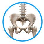 肩こりの根本原因は骨盤にあります。鍼灸は効果的です。