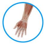 肩こりの根本原因は手や腕の強張りにある